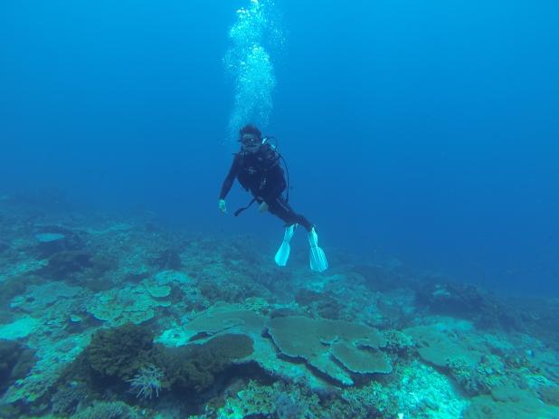 https://tanjungwatersport.com/diving/